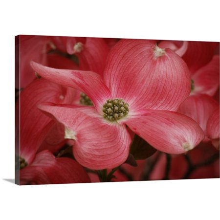 "Great BIG Canvas | ""Dogwood Delicacy IV"" Canvas Wall Art"