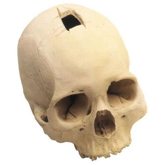 skullduggery 0202 Trephined Cranium by Skullduggery