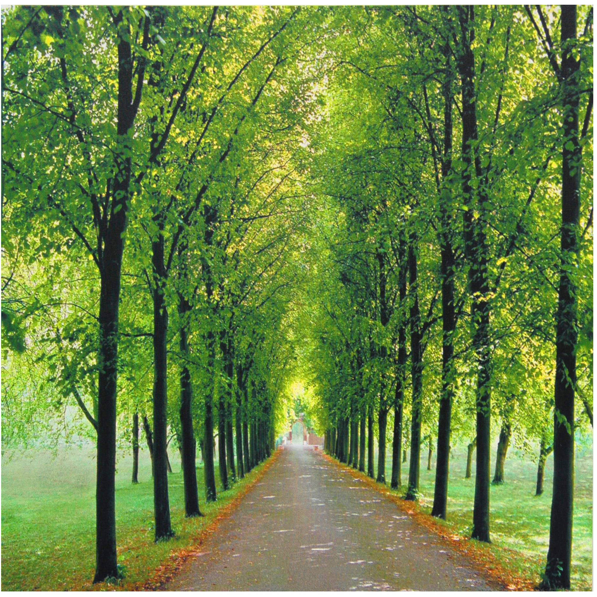 Path of Life Canvas Wall Art
