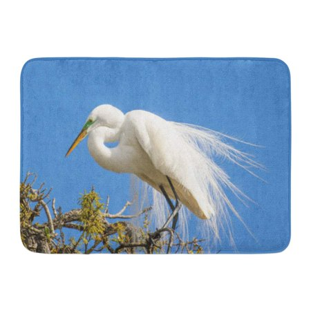 GODPOK Heron Green Breeding Great Egret in Mating Plumage Rookery Near St Augustine Florida Yellow Eye Huge Rug Doormat Bath Mat 23.6x15.7 inch