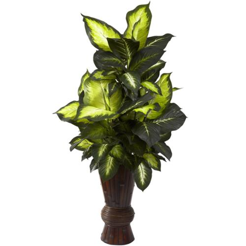 Golden Dieffenbachia and Bamboo Planter