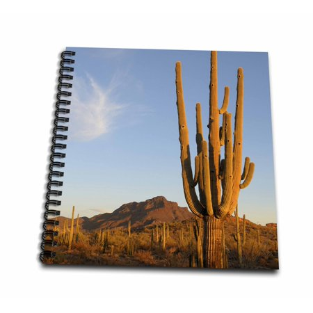 Note Range - 3dRose Arizona, Organ Pipe Cactus. Saguaro Cactu in front of the Ajo range - Mini Notepad, 4 by 4-inch