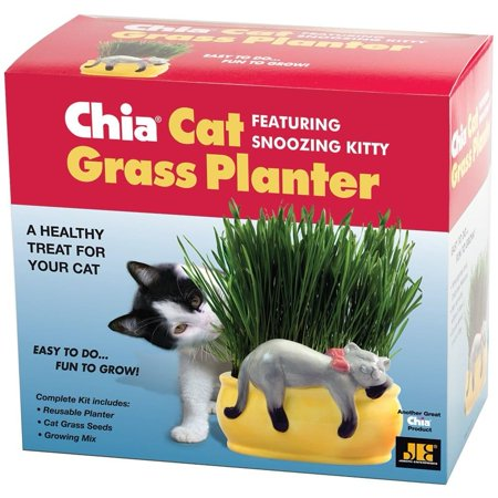 Chia Pet Grass Planter: Snoozy Cat