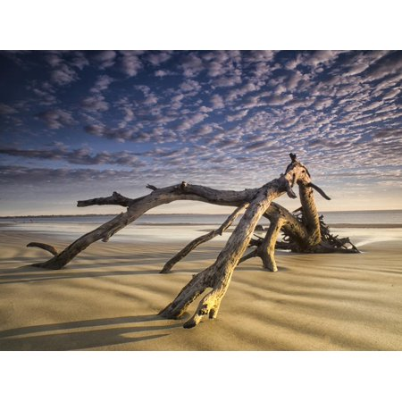 Looking Like a Sea Serpent, a Piece of Driftwood on the Beach at Dawn in Jekyll Island, Georgia Print Wall Art By Frances
