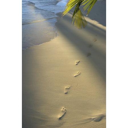 Footprints In Sand At Waters Edge Soft Warm Golden Light Canvas Art - Tomas del Amo  Design Pics (22 x 34)