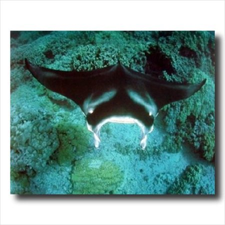 Sea Ray Canvas (Manta Ray Ocean Sea Life Wildlife Wall Picture Art Print )