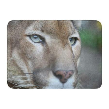 GODPOK Strong Big Posing While Resting Cougar Animal Rug Doormat Bath Mat 23.6x15.7 inch