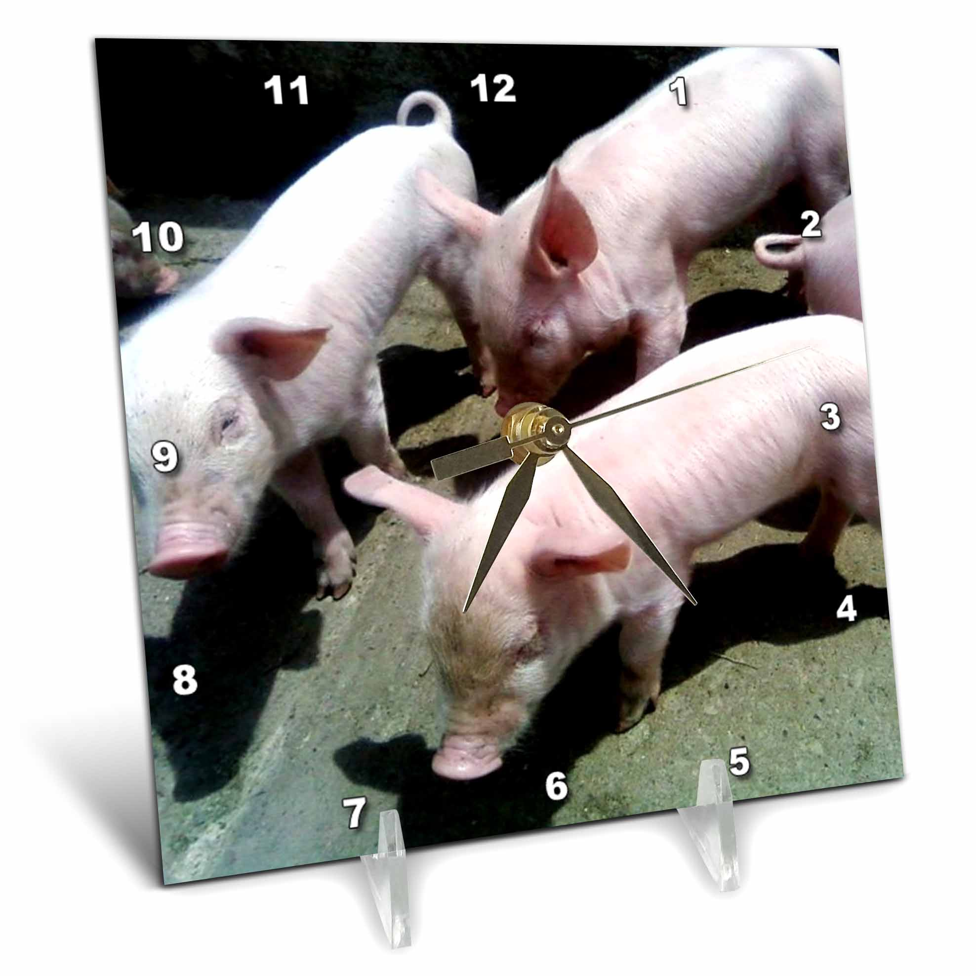 3dRose 3 Baby Pigs, Desk Clock, 6 by 6-inch by 3dRose