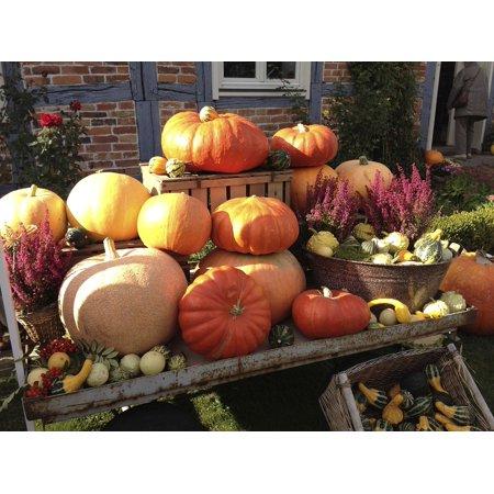LAMINATED POSTER Halloween Autumn Pumpkin Pumpkin Festival Poster Print 24 x 36 (Halloween Harvest Festival)