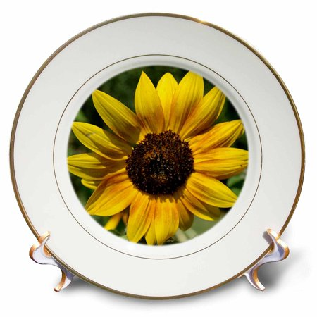 3dRose Colors of the Sun- Yellow Sunflowers- Floral Photography- Flowers, Porcelain Plate, 8-inch
