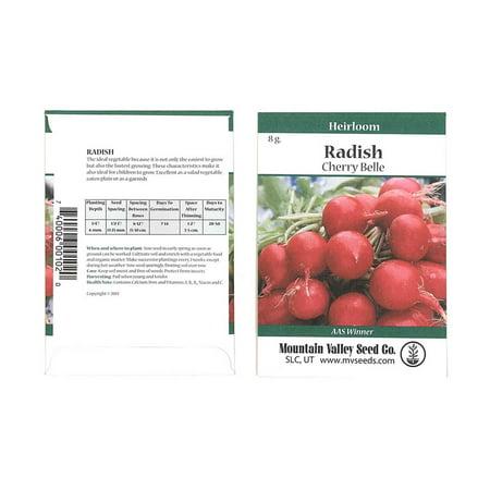 Garden Radish (Cherry Belle Radish Seeds - 8 Gram Seed Packet - Heirloom Garden Seeds, Non-GMO, AAS Winner - Vegetable Gardening and Micro Greens )