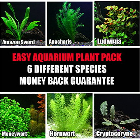 6 Species Easy Live Aquarium Plants Package - Anacharis, Amazon and more! Aquarium Amazon Sword Plant