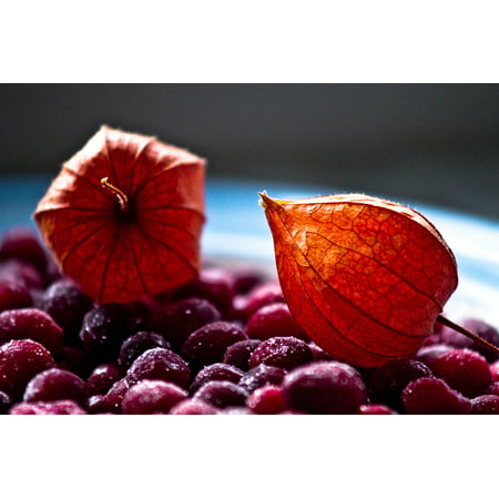 - Peel-n-Stick Poster of Winter Cranberry Still Life Tomatillo Composition Poster 24x16 Adhesive Sticker Poster Print