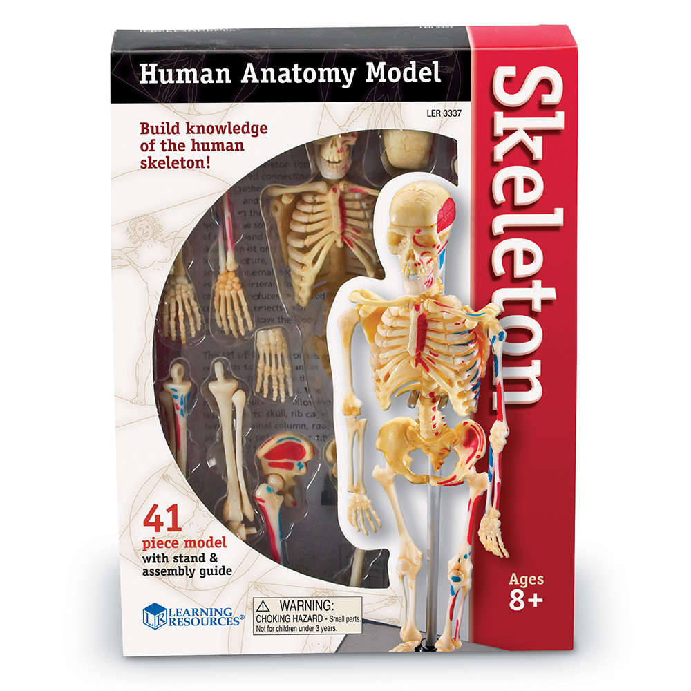 Learning Resources Skeleton Anatomy Model Walmart