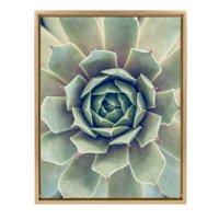 Kate and Laurel Sylvie Succulent 1 Color Photograph Framed Canvas Wall Art by F2 Images, 18x24 Gold