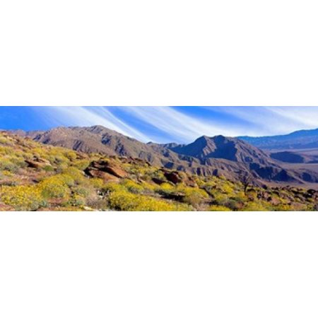 Flowering Shrubs Anza Borrego Desert State Park California Poster Print by Panoramic Images (36 x 12) Anza Borrego Desert State Park