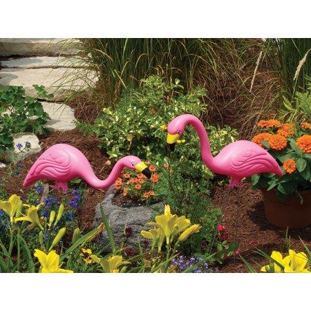 Bloem Pink Flamingo 25