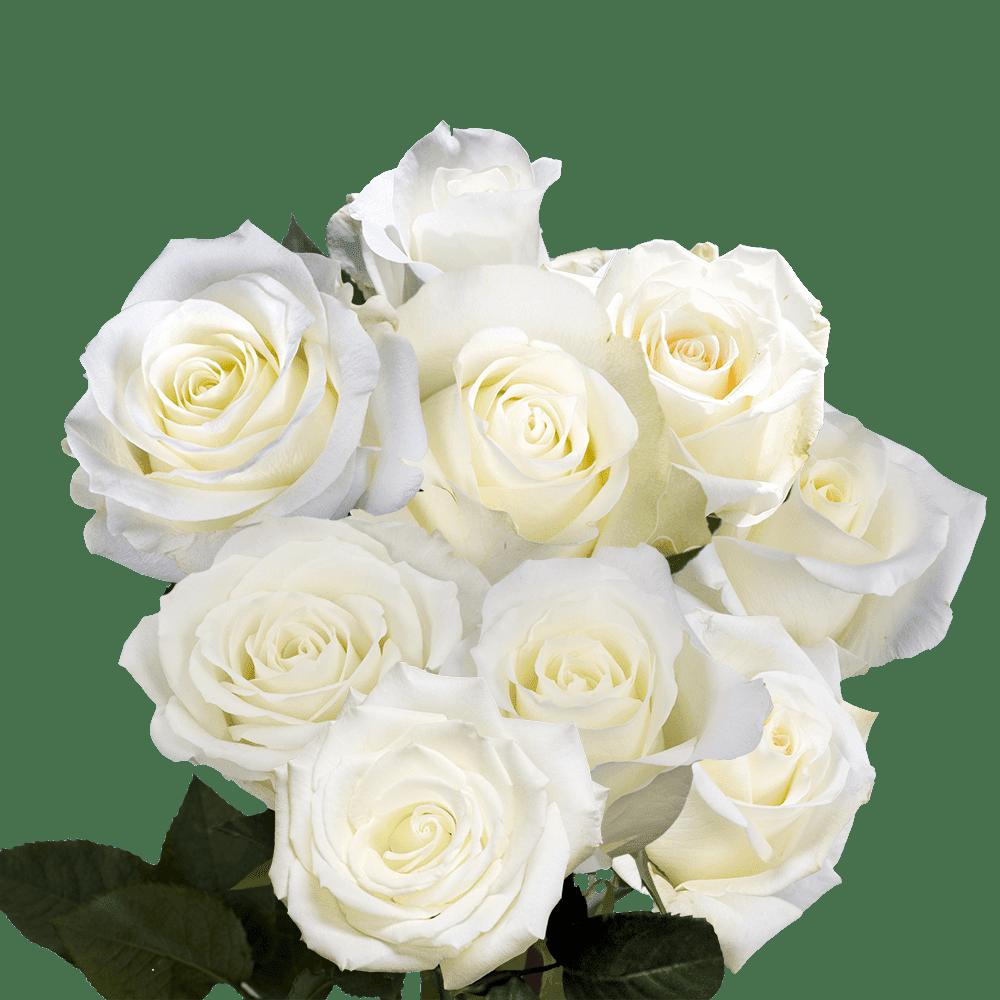 Fresh Cut Birthday White Roses