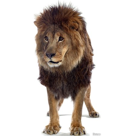 Lion King Of The Jungle Animal Lifesize Standup Standee Cardboard Cutout Poster (Lion Cardboard Stand)