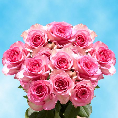 GlobalRose 50 Fresh Cut Happy Anniversary Pink Roses - Fresh Flowers Express Delivery - Perfect for Anniversaries - Walmart.com