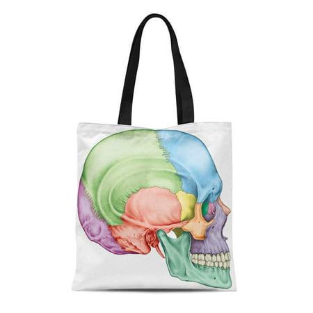 JSDART Canvas Tote Bag the Bones of Cranium Head Skull Individual and Their Reusable Shoulder Grocery Shopping Bags Handbag - image 1 of 1