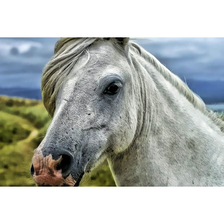 Horse Portrait (LAMINATED POSTER Horse Head Animal Portrait Mane Head Countryside Poster Print 24 x)
