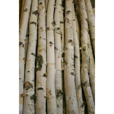 White Birch Pole 3ft