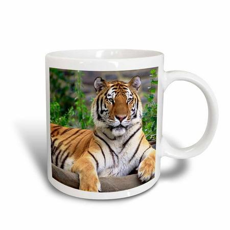 Tigers College Logo Mug - 3dRose Siberian Tiger, Ceramic Mug, 11-ounce