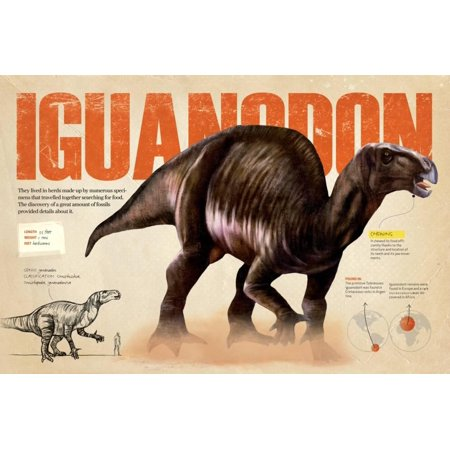 Infographic of the Iguanodon, an Ornithischia Dinosaur in the Cretaceous Period of the Mesozoic Era Poster Wall Art