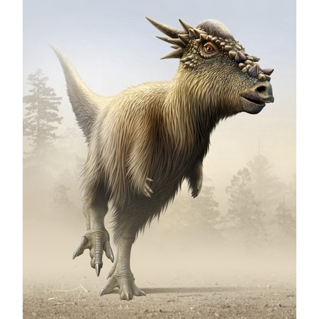 Stygimoloch Is A Genus Of Pachycephalosaurid Dinosaur From The Late Cretaceous Period Poster Print