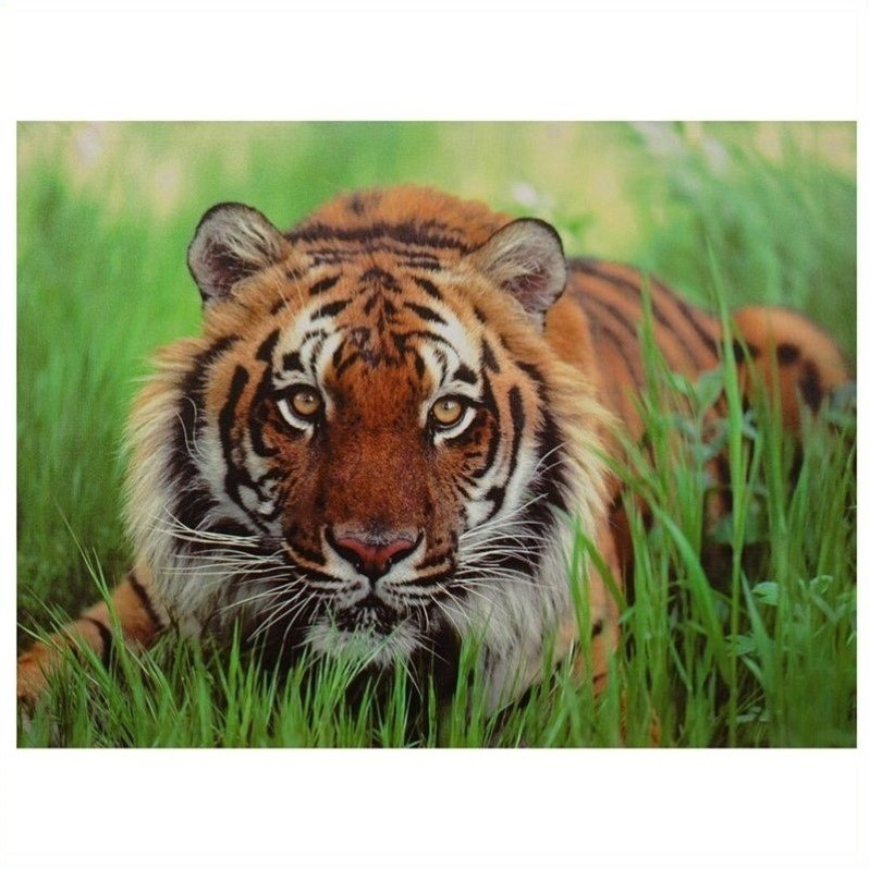 Oriental Furniture Crouching Tiger Canvas Wall Art in Multicolor