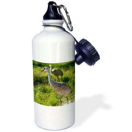 3dRose Sandhill Crane birds Nebraska - US26 GHA0062 - Gayle Harper, Sports Water Bottle, 21oz