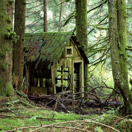 Rotting Wooden Shed Covered in Moss, Washington State, Usa Print Wall Art By Mark Taylor