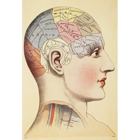 Pics Of Snoopy (A Phrenological Map Of The Human Brain From Virtues Household Physician Published London 1924 Canvas Art - Ken Welsh  Design Pics (12 x)