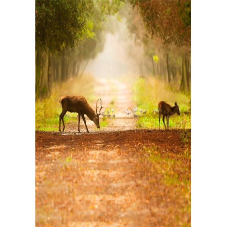GreenDecor Polyster Backdrop 5x7ft Photography Background Wild Elk Dreamy Forest Trees and Road Hazy Morning Scenery Personal Portraits Background Photo Studio Props