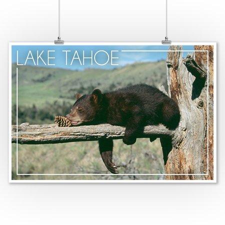 Lake Tahoe, California - Bear Cub with Pinecone - Lantern Press Photography (James T. Jones) (9x12 Art Print, Wall Decor Travel Poster)
