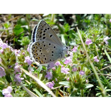 Laminated Poster Flower Insect Butterflies Flowers Butterfly Macro Poster Print 24 x 36