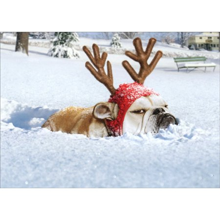 Avanti Press Bulldog Reindeer Box of 10 Funny / Humorous Dog Christmas