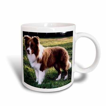 3dRose Border Collie Tan and White, Ceramic Mug, 11-ounce