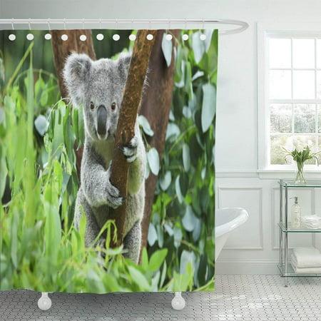 Bpbop Gray Animal Koala Bear In The Zoo Cute Australia