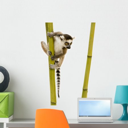 Ring tailed Lemur Wall Decal Sticker Wallmonkeys Peel Stick Vinyl Grap