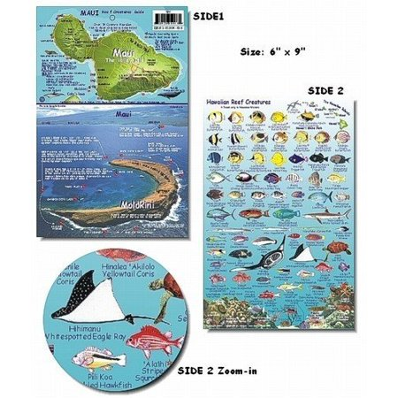 Maui hawaii reef fish and creature guide for Maui fishing store