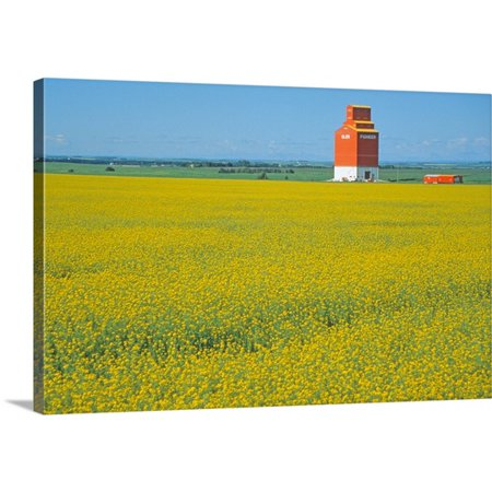 Great BIG Canvas Mark Gibson Premium Thick-Wrap Canvas entitled Canada, Alberta, Red Deer, canola flower (Deer Resistant Flower)