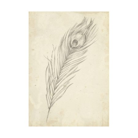 Peacock Feather Sketch II Print Wall Art By Ethan (Giclee Print Feather Print)
