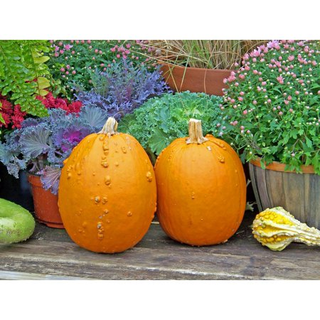 Canvas Print Autumn Life Pumpkins Still Fall Flowers Halloween Stretched Canvas 32 x 24 - Pumpkin Life Cycle
