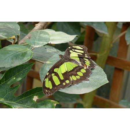 LAMINATED POSTER Insects Nature Butterfly Spring Butterflies Garden Poster Print 24 x 36
