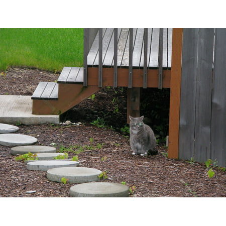 Canvas Print Deck Wood Outside Steps Cat Outdoors Stairs Stretched Canvas 10 x