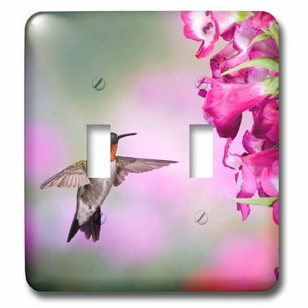 Humminbird Switch - 3dRose Illinois, USA - Ruby-throated Hummingbird., Double Toggle Switch