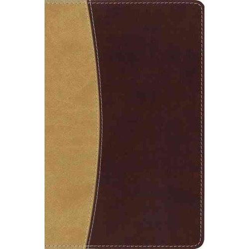 Free amplified bible