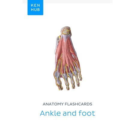 Anatomy flashcards: Ankle and foot - eBook